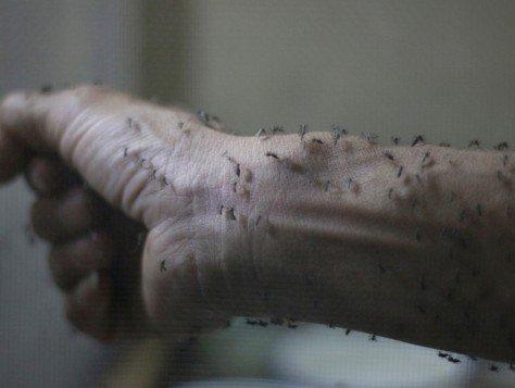 兹卡病毒(Zika)继续扩散 美国疾控中心(CDC):增加旅行警告国家
